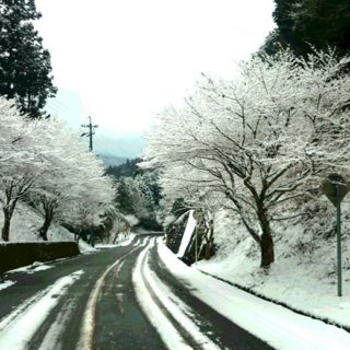 真心からの応援を続けて下さる同志から頂いたもの。雪景色の中、まっすぐ延びる「この道」が印象的です