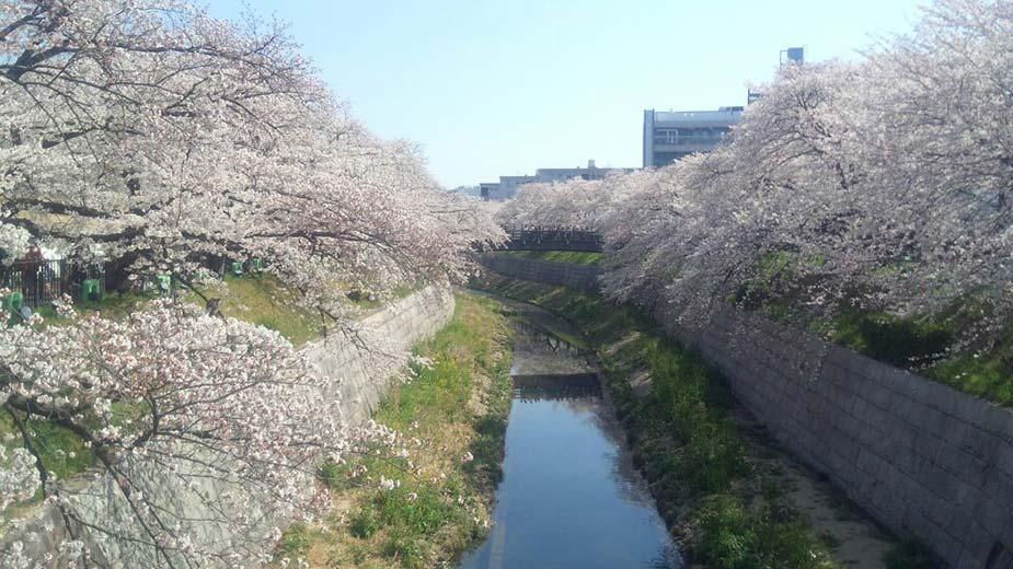 桜も満開となり、いよいよ春到来!