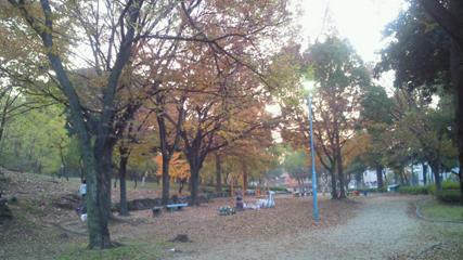 公園の木々が綺麗に輝いて