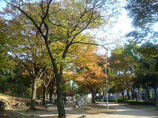 秋晴れの中、綺麗に色づいた樹木達