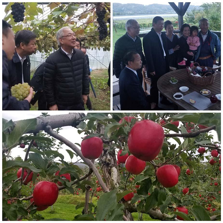 北海道壮瞥町にて果樹園を視察